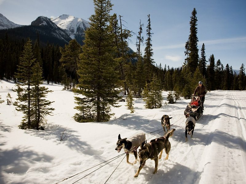 Dog Sledding at Lake Louise, Banff National Park