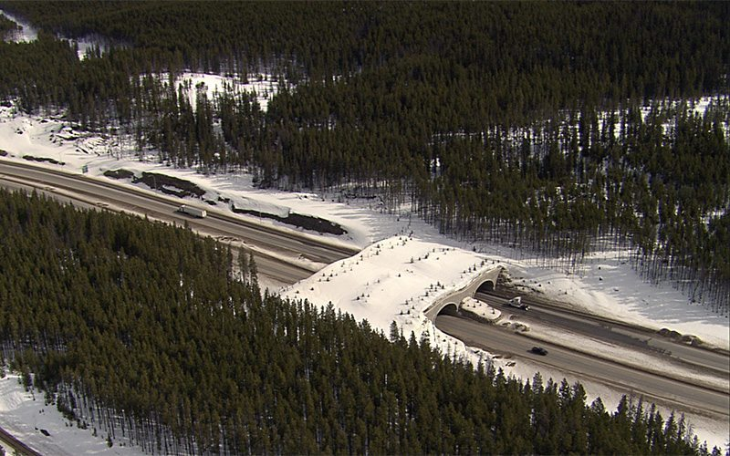 Trans Canada Highway Animal Overpass