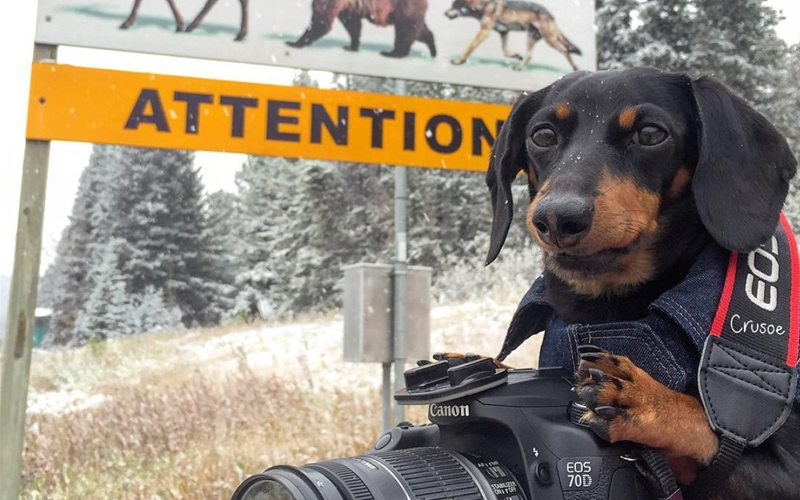 Stay safe when exploring Banff National Park your pet by keeping your distance from wildlife. Photo: CelebrityDachshund.com