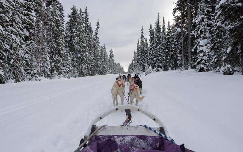 Dogsledding is a scenic way to explore Banff National Park. Photo: ThePlanetD.com