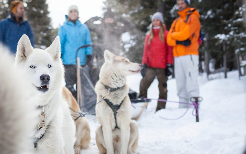 A dog sled ride is a unique way for couples to explore Banff National Park. Photo: Noel Hendrickson.