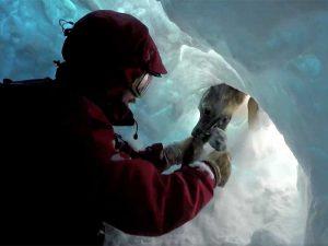 Avalanche Awareness Day at Banff Sunshine