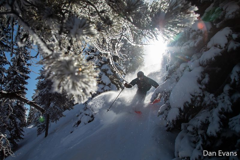 Matt Monod skies through the trees on Gun Run at Mt. Norquay ski resort, Banff National Park.