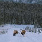 Six Ways to Safely Watch Wildlife in Banff National Park