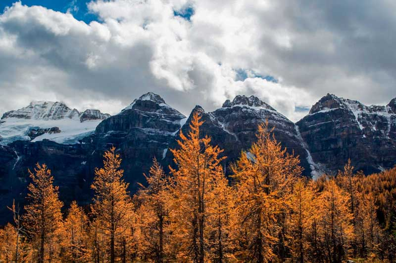 Larch trees in Larch Valley, Banff National Park.