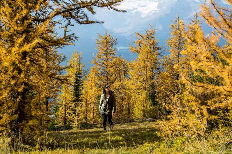 Larch hike at Lake Louise Ski Resort, Banff National Park.